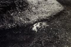 img018 (pierremartial) Tags: canon canona1 ilford sfx200 sfx infrared infrarouge black white blackandwhite blanc noir noiretblanc monochrome film ishootfilm istillshootfilm shootfilmnotbullets shootfilmnotmegapixels nature périgord dordogne