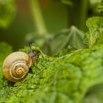 Petit escargot thumbnail