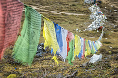 Jare La (or Jhari La) pass and prayer flags - Gasa District - Snowman Trek - Bhutan (PascalBo) Tags: nikon d500 asie asia southasia asiedusud drukyul drukgyalkhap bhutan bhoutan འབྲུག་ཡུལ། འབྲུག་རྒྱལ་ཁབ་ snowman trek trekking hike hiking lunana himalaya himalayas jigmedorjinationalpark buddhism bouddhisme religion outdoor outdoors pascalboegli gasa