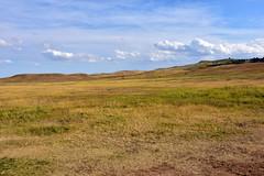 Custer State Park (MarkusR.) Tags: mrieder markusrieder nikon d7200 nikond7200 vacation urlaub fotoreise phototrip usa 2017 usa2017 southdakota blackhills custer statepark custerstatepark wildlifereserve wildtierschutzgebiet nature natur landschaft landscape wildlife animals tiere