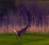 our house (4 of 4).jpg (iksukjih73) Tags: deer sturgeonbay doorcounty wisconsin wi algoma kewauneecounty claybanks canal newyork ny