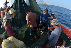 188 Kerjasama (2121studio) Tags: fishing boat fisherman nelayan southchinasea southeastasia pukat jerut purseseinesfishingnet marine fish tangkapikan ocean lkim perikanan fishery lifeoffisherman kehidupannelayan tekong awakawak crew ikan aya tuna