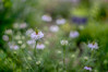 (kderricotte) Tags: sony sonya7ii ilce7m2 bokeh depthoffield flower plant meadowlarkbotanicalgardens gardens outdoor