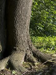 Oxygen Factory Talons (Boneil Photography) Tags: boneilphotography brendanoneil canon powershot g16 tree bark shadows contrast spotmeter