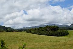 DSC33_19590 (heartinhawaii) Tags: valley princeville kauai hawaii landscape forest green roadside nature nikond3300