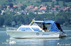 Attention les petits, il y a un intrus sur notre lac ! (Jean-Daniel David) Tags: oiseau oiseaudeau cygne cygneau bateau village bleu blanc reflet forêt lac lacdeneuchâtel yvonand eau suisse suisseromande vaud