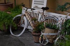 white bicycle (kasa51) Tags: bicycle rusty ruined kawasaki japan 自転車 abandoned