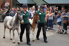Inca Dove and Phoenix on Parade (meniscuslens) Tags: horse trust horses hounds heroes event charity rescue pony foal filly mare crowd