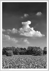 IMGP5115-sw.Rahmen-kl (fredericfromage) Tags: sw bw monochrom landschaft himmel felder wolken münsterland