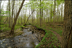 "Medway Forest springtime trail (Darrell Colby "" You Call The Shots "") Tags: medway medwayforest trail forest trees spring springtime beautiful londonontario darrellcolby"