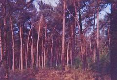 Huis ter Heide (Der Ohlsen) Tags: huisterheide kodakultrazoom einwegkamera singleusecamera analog 35mm kb expired colour film c41 netherlands niederlande
