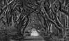 Dark Hedges #4 (efgepe) Tags: 2018 irland lightroom mai dark darkhedges hedges gameofthrones bw sw schwarzweiss silverefexpro schwarzundweiss blackwhite nik bäume trees buchenallee book 200mm