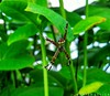    Spider    (anishmangal) Tags: macro insect leaf tree indianphotographer spider