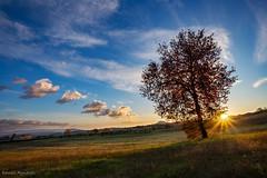 Il ritorno alle mie colline . (Danilo Agnaioli) Tags: collinedelperugino umbria italia natura tramonto canon6d sigma1224 sole prato alberi cielo nuvole