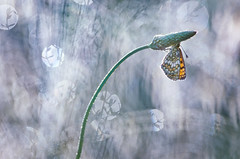 Sparkling! (donlope1) Tags: macro nature light sunrise sun papillon butterfly inset proxy wildlife bokeh dew spring