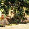 ~ roses ~  Nora Sweden (Tankartartid) Tags: träd tree inramad framed hus building rödarosor redroses blomma blommor flower flowers rosor roses citypicture stadsbild stad city norden nordic nora europe sverige sweden