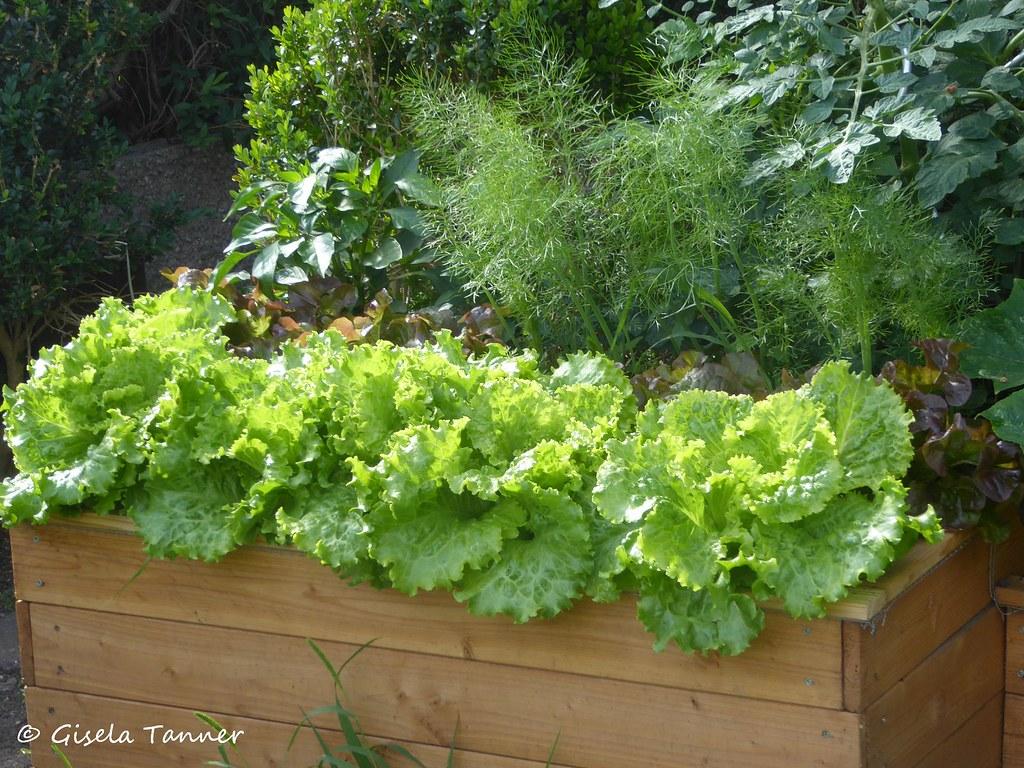 Genial Hochbeet Diy Das Beste Von (tannertext) Tags: Garten