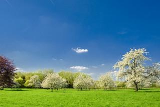 Hesbania Spring