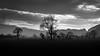 Sentinel (Alan Hughes Mach) Tags: cymru wales uk blackandwhite bw bnw mono monochrome noiretblanc blackwhite black grey cielo ciel sky landschaft landscape paysage paisaje scenery eos canon 200d sl2 canon200d canonsl2 naturaleza nature natur natural machynlleth powys field tree trees wood forest dyfi cloud clouds contrast dof evening silhouette sentinel lines coth5 skyline light march spring sunlight afternoon