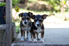Two (annfrau) Tags: dogs doggies puppies cuteness cuties