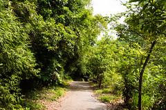 九九峰步道 (briandodotseng59) Tags: asia taiwan nature hike color coth5 mountain yellow green sun light shadow black sky nikkor nikon digital
