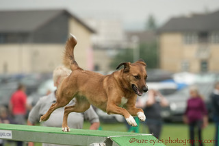 Phoenix Agility Dog Show