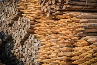 wooden poles #3