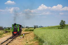 O&K 7697 (Mikołaj Radzikowski) Tags: dampflok zug train narrowgauge schmalspurbahn