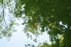 Fishes in the trees (Baubec Izzet) Tags: baubecizzet pentax nature light reflections trees