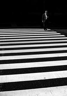 Zebra in Tokyo