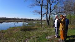 the beaver pond, Tisarana