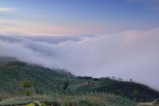 Sea of clouds at tea field,大崙山雲海