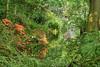 Lush river scene (Derek N Winterburn) Tags: 1places unitedkingdom bushypark richmonduponthames molesey england gb