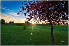 AUGUST 2016  NM1_0299_014421-222 (Nick and Karen Munroe) Tags: landscape landscapes dawn sunrise morning daybreak sunlight sunburst sun sunshine starburst spring karenandnick munroe karenmunroe karen ontario outdoors brampton bramptonontario ontariocanada nikon nickandkaren nickandkarenmunroe karenick23 karenick karenandnickmunroe nature canada nick d750 nikond750 munroedesigns photography munroephotoghrpahy nickmunroe munroedesignsphotography munroephotography munroenick beauty brilliant nikon1424f28 1424 1424f28 nikon1424 nikonf28 f28 colour colours color colors