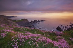 Clifftop Thrift (Explore) (Twogiantscoops) Tags: purples floral flora clifftop 1000 mostintetesting explored inexplore beach photomerge west hartland iplymouth country tide photoshop lee luminosity longexposure coast devon organdonor filters giveblood bhf ocean hartlandquay leefilters 5dmk2 mirrorlock sea canon pastel sundown manfrotto landscape seapinks shutterremote thrift giftoflife sunset twogiantscoops seascape circularpolariser watermovement 1635mm creativity light chrismarshall'simages