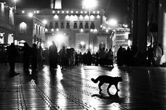 THE THREE LEGGED HOLY PUSSY (N A Y E E M) Tags: cat pussy latenight light atmosphere alharam holymosque mecca makkah makkahalmukarramah ksa saudiarabia availablelight