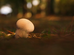 Nature's Pincushion (Lucy_Lapwing) Tags: fungi fungus mushroom toadstool toadstools mycology springwatch nature