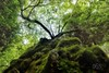 Old tree (AS MYSELF) Tags: sannicolasdelpuerto sevilla seville sevillában sevillan andalucia andalusia andalousie naturaleza nature arbol tree arvre green verde hdr canoneos70d diegogutiérrez
