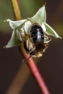 Bee Butt - _TNY_1093
