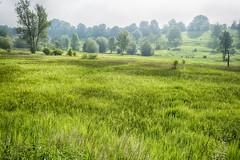 Foggy Morning (enneafive) Tags: fog hesbania grass green trees hill landscape fujifilm xt2 overbroek gelinden sinttruiden limburg belgium nature bucolic pastoral meadow light