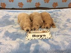 Roxie Boys pic 3 6-2