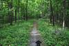 Hiking Trail along the Iowa River (Tony Webster) Tags: cortana iowa iowariver solon dog hike hiking hikingtrail trail unitedstates us