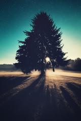 (nabsuzil) Tags: fullspectrum landscape nightscape tree moonolight mood moon rayoflihjt silhouette stars night aisne picardie vauclair abbaye