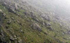 Gain The Rain ($ALEH) Tags: iran nature darband tehran rain drop closeup fog moist