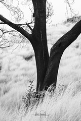 The magic of life after death (RuiFAFerreira) Tags: beauty bw black blackwhite white trees highcontrast conceptual canon