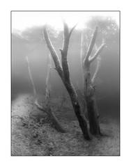 Kreidesee (Knipsbildchenknipser) Tags: hemmoor kreidesee see tauchen diving scuba scubadiving wald forest baum bäume tree uw underwater unterwasser sw schwarzweiss monochrome blackandwhite blackwhite bw