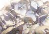 Last year's Hydrangea (Durley Beachbum) Tags: odc dired muted flower hydrangea june