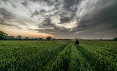 Four Hours Sleep (Rob Pitt) Tags: samyang 14mm f28 a7rii sony wirral field wide angle eastham cheshire summer morning sunrise hss
