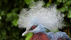 Bird Pairi Daiza (YᗩSᗰIᘉᗴ HᗴᘉS +17 000 000 thx) Tags: pairidaiza zoo bird nature hensyasmine yasminehens belgium belgique