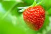 Sweet. (cosovan vadim) Tags: strawberry fresh fruit red nature leaves nikon d750 tamron 90mm f28 sweet food macro bokeh color